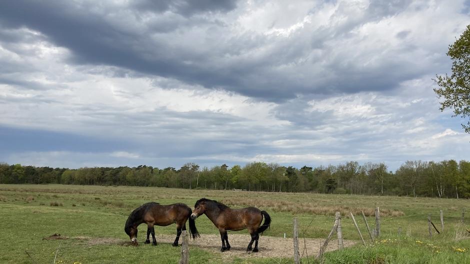 Paardjes knus bij elkaar onder dreigende wolken
