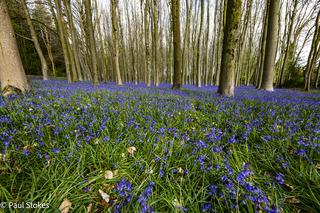 Blue Bell Woods 2021 - Wrington/Cleve area