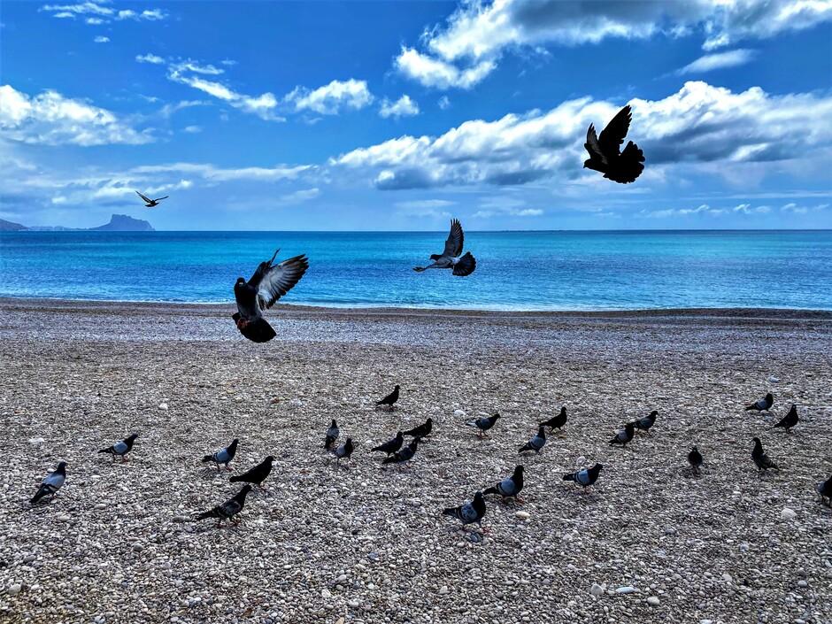 In vogelvlucht door Altea.