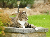 PROJ 52, RELAXATION.   CAT IN THE GARDEN AT HEMPTON