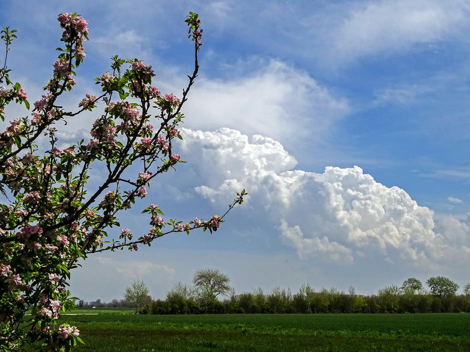 Groeiende bloemkoolwolken