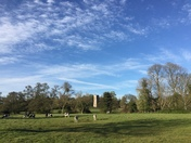 Evening walk Great Bealings meadows