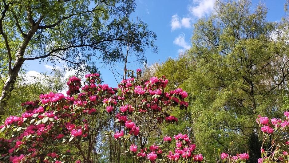 Mooie lentedag in het park