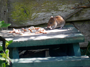 Breakfast time for the mice