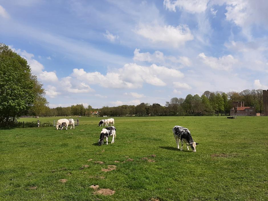Wolken,  wat blauwe lucht en koeien