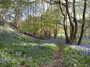 Beautiful Nature in Norwich