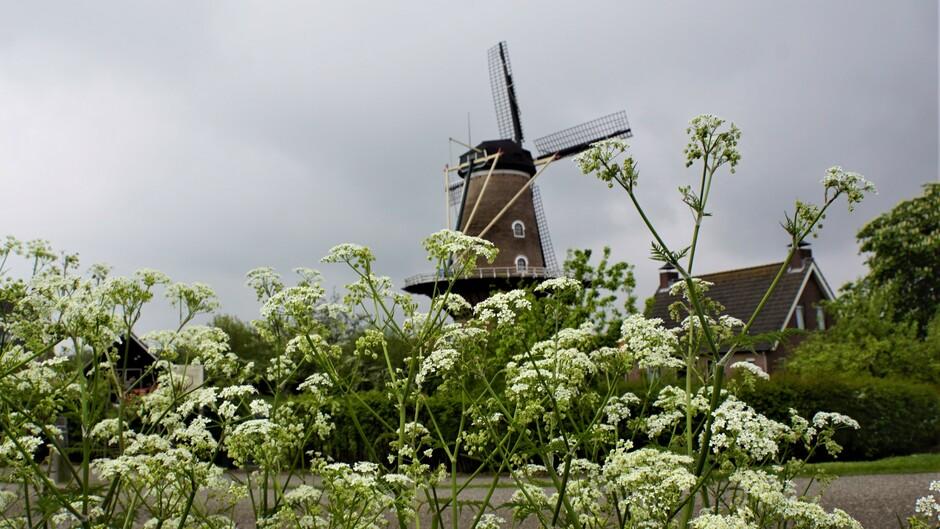 grijs en bewolkt weer 12 gr fluite kruid bij de molen