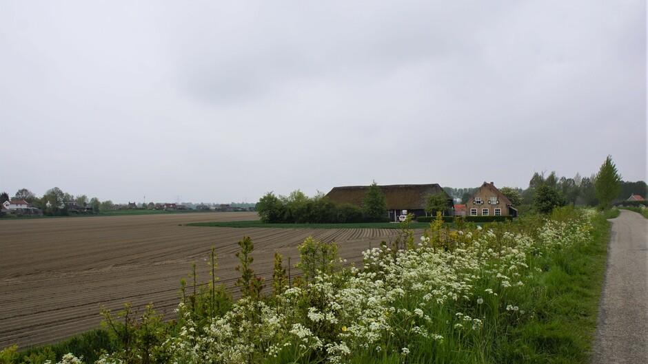 grijs en bewolkt weer 12 gr af en toe iets regen in de polder