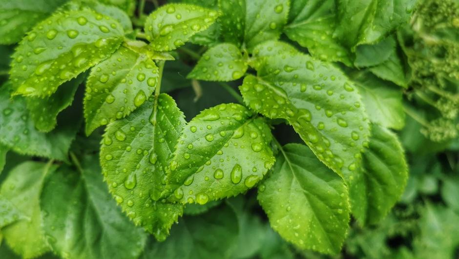 Regen vanmiddag