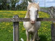 Paddock with pony