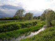Greens of spring ,Nayland