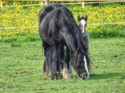 foal fun
