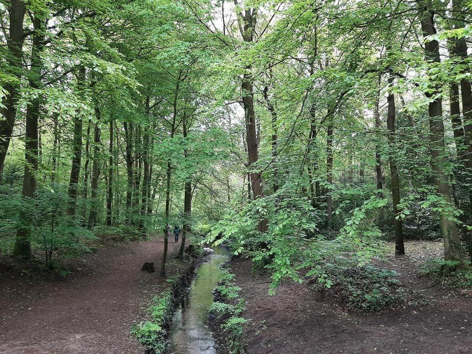 Fris groen in het bos