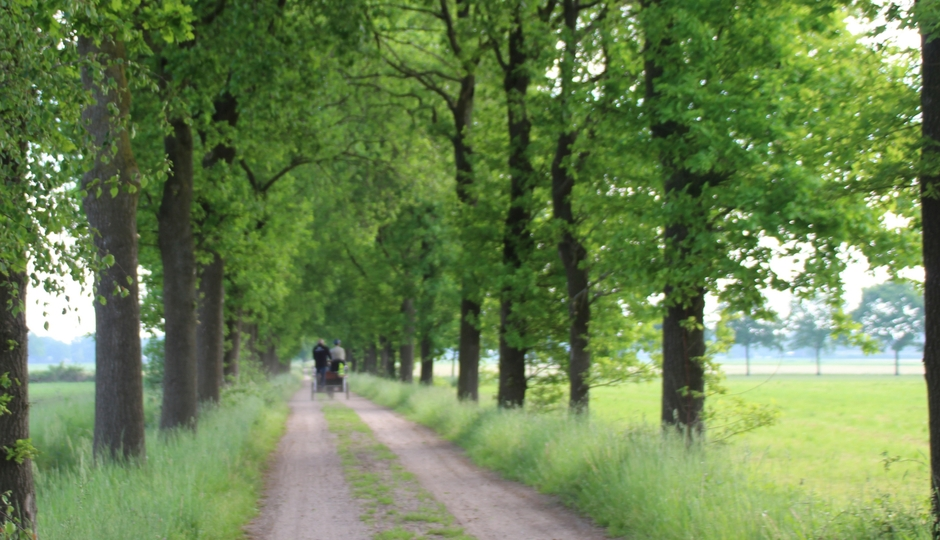 Natuur is zo mooi groen nu.