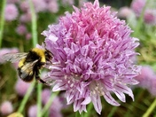 Wet flowers and busy bees