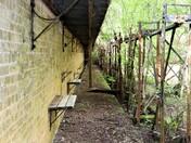 late spring in sutton heath/bromeswell
