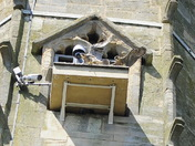 Norwich Cathedral Juvenile peregrines
