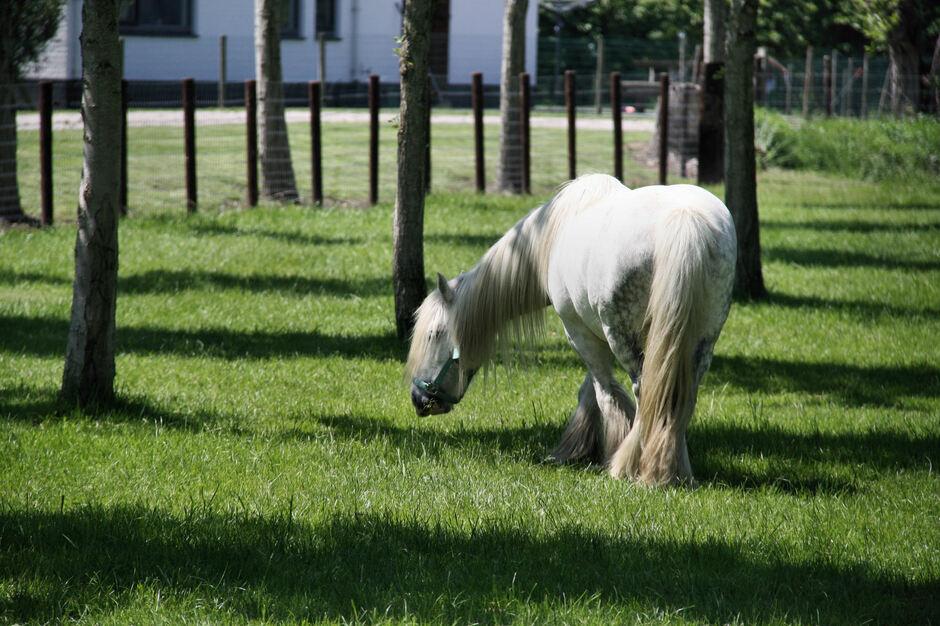 Paard heeft schaduw van de bomen