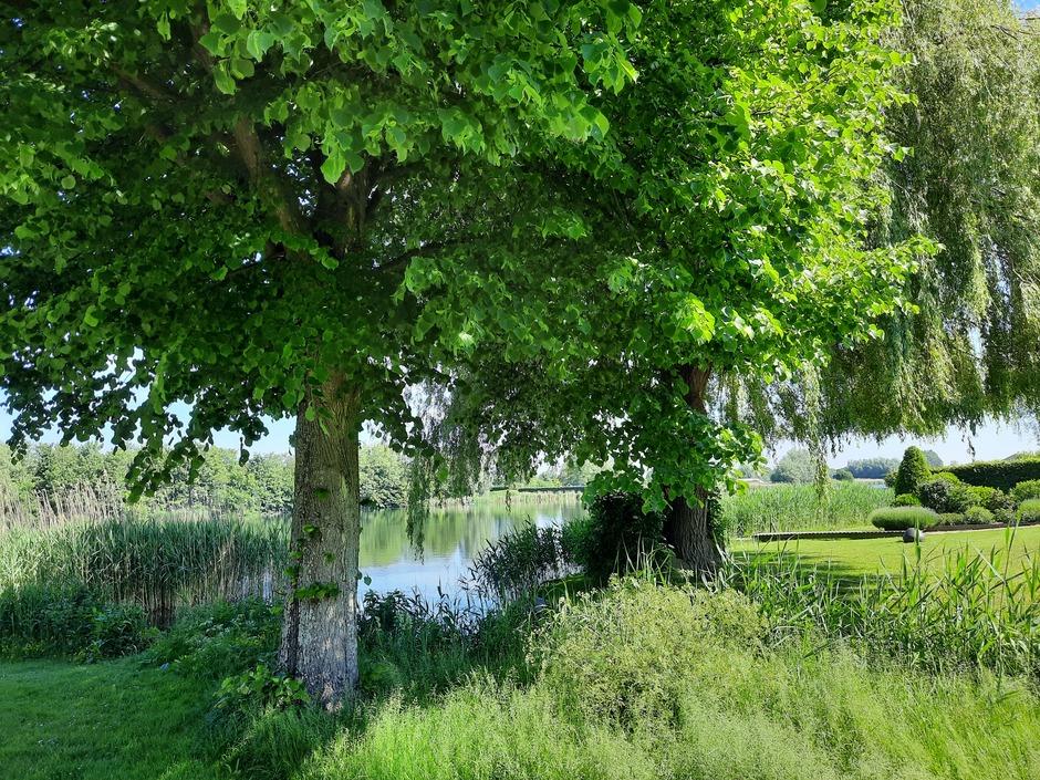 Voorjaars groen