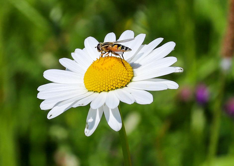 Insecten genieten van de warmte