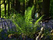 Simple little fern