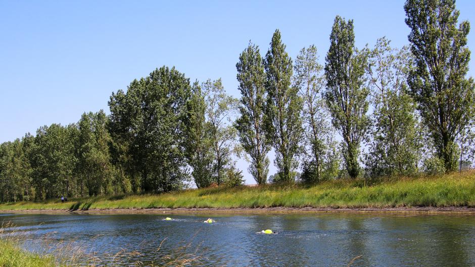 Zwemmers in het kanaal