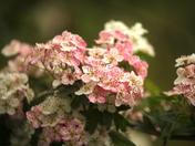 Beautiful summer flowers at Fen Farm