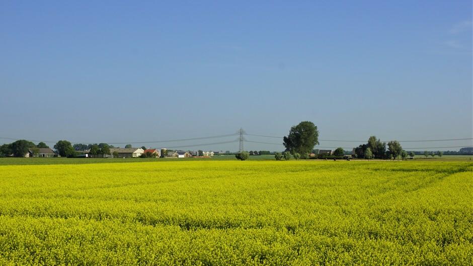 zonnig blauwe lucht 23 gr bloeien geel koo;zaad