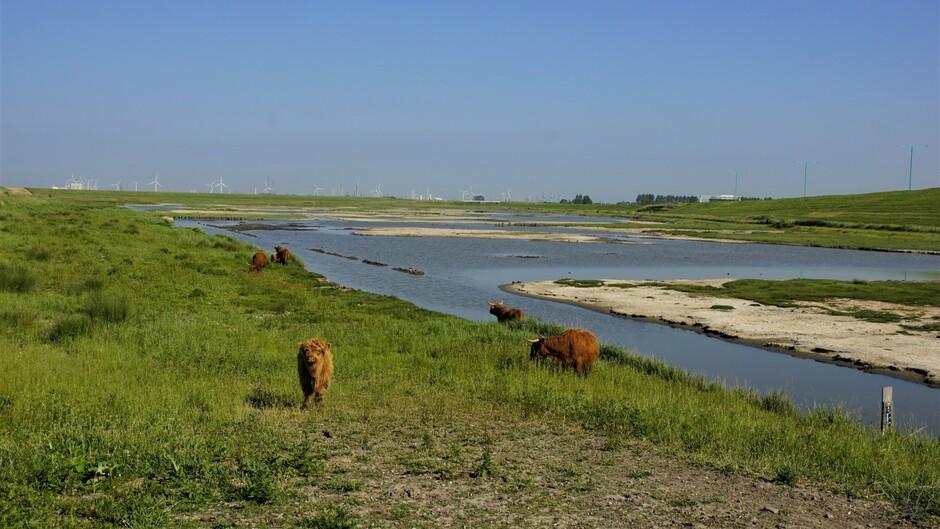 zon blauw natuur 23 gr koe in het water