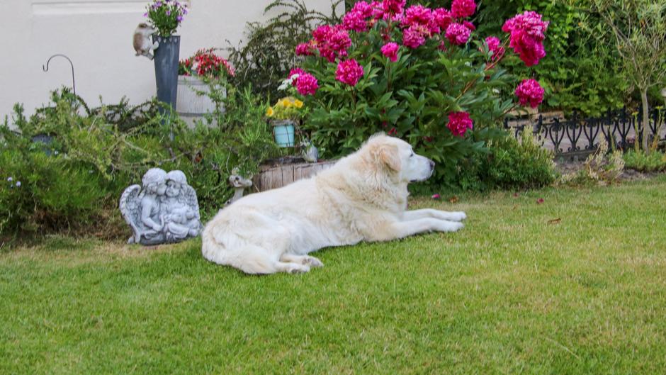 Hond nog buiten aan het genieten