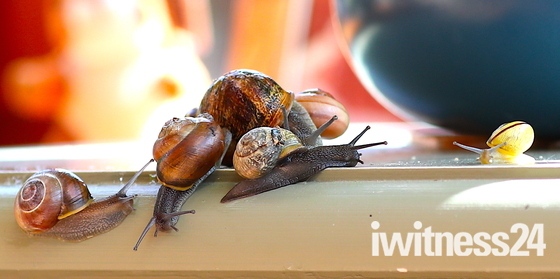 So many Snails this year >