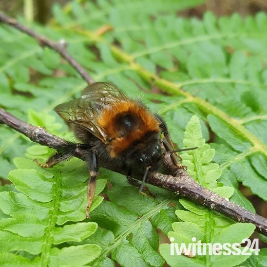 Mousehold bee spotting