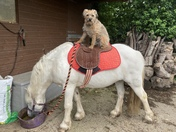 One dog and his pony