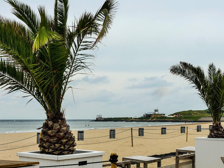 Bewolkt fris weer palmbomen