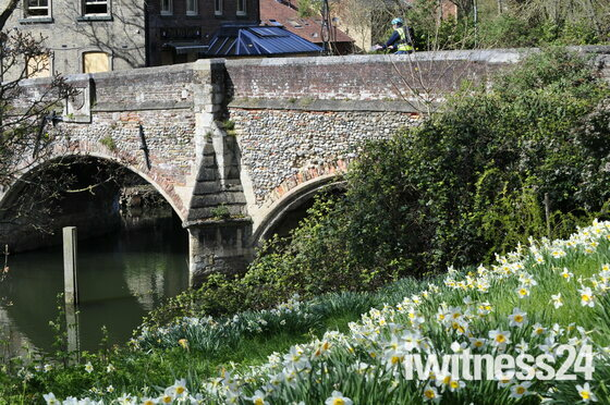 Bishop Bridge and  Daffodils