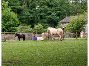 Horse and pony.