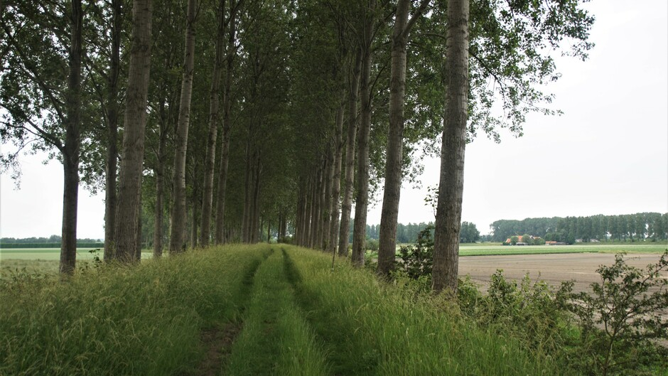 grijs en bewolkt op de dijk met bomen 14 gr