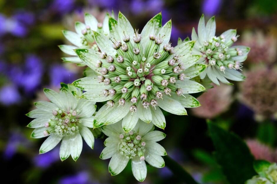 bloemrijk