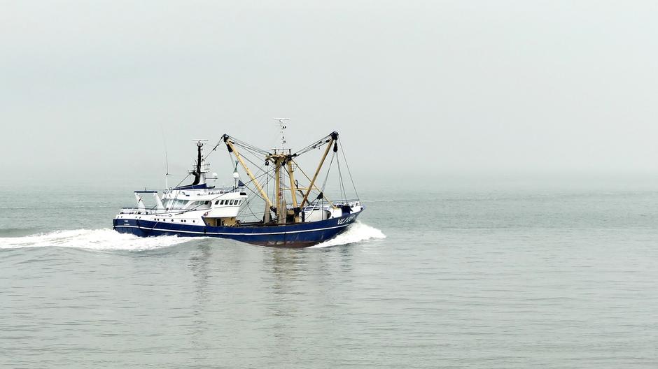 Contrast van viskotter tegen grijze heiïge lucht