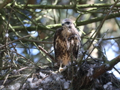 Photo Challenge  Project 52   Bird life.