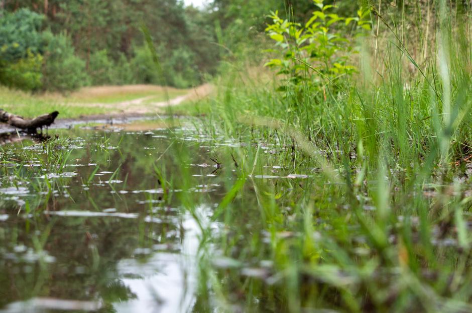 Plassen in het bos