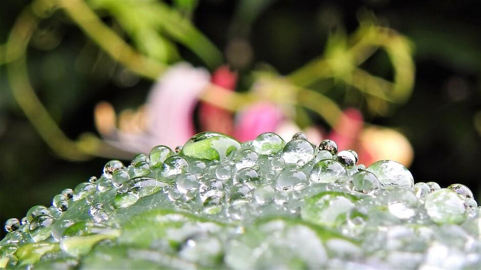 Raindrops keep fallin on my head....