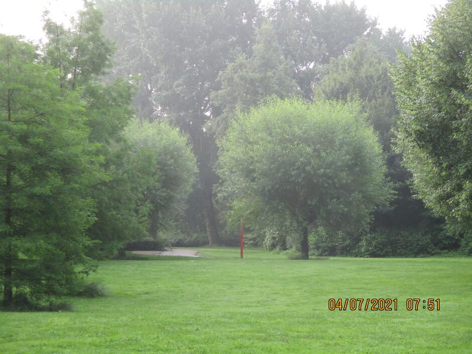 Dauw tussen de bomen