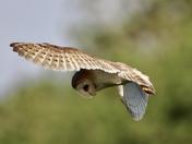 Owl display