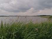 HICKLING NATURE