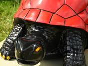 Tortorossa Tortoise