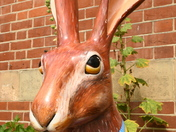 Rover the Hare