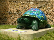 Tusti the Tortoise