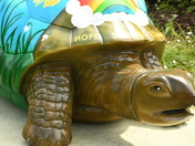 Hope Springs Eternal Tortoise