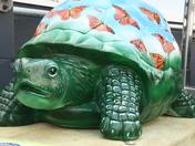 Monarch Metamorphosis Tortoise